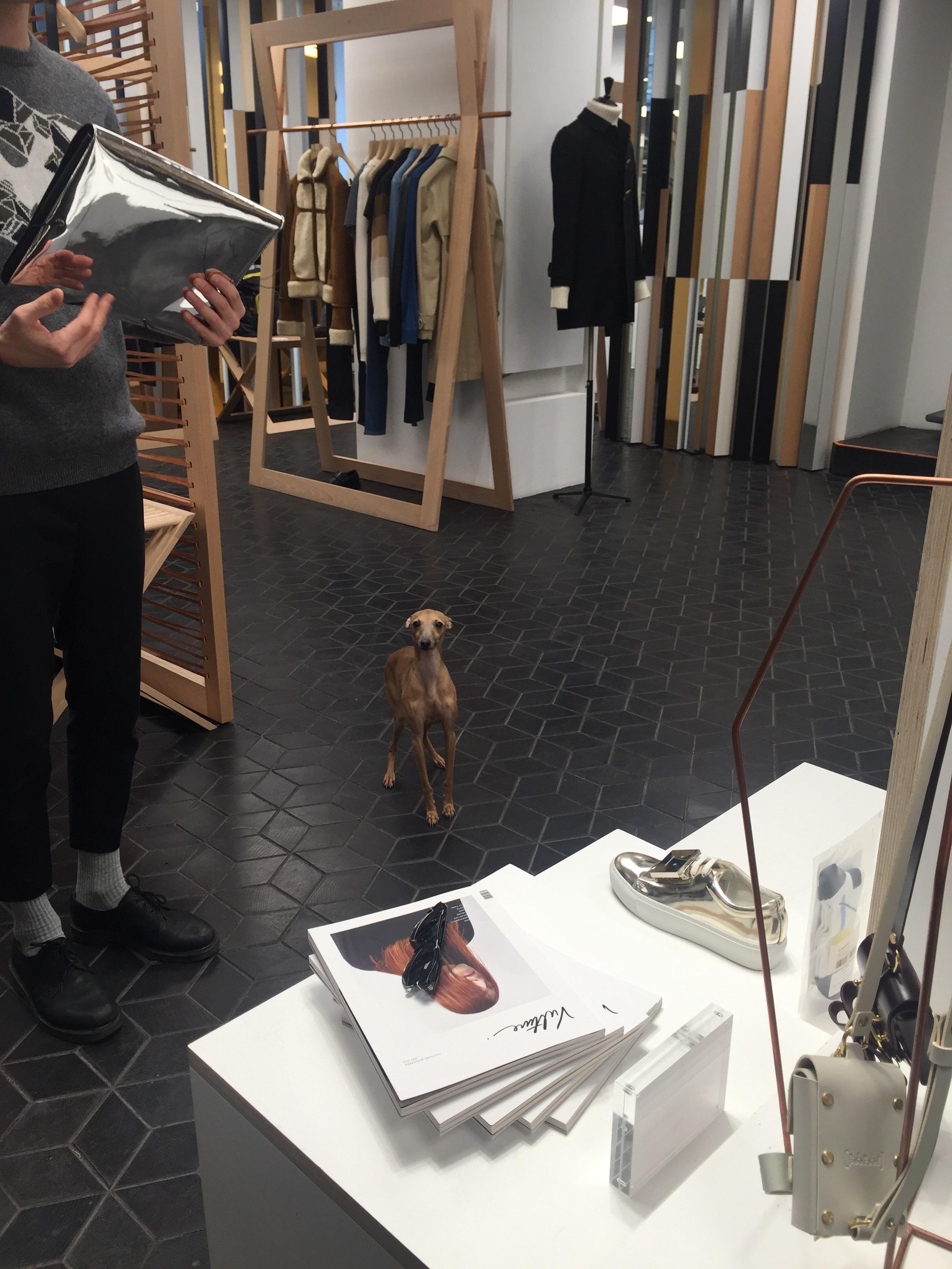Tom Greyhound concept store paris